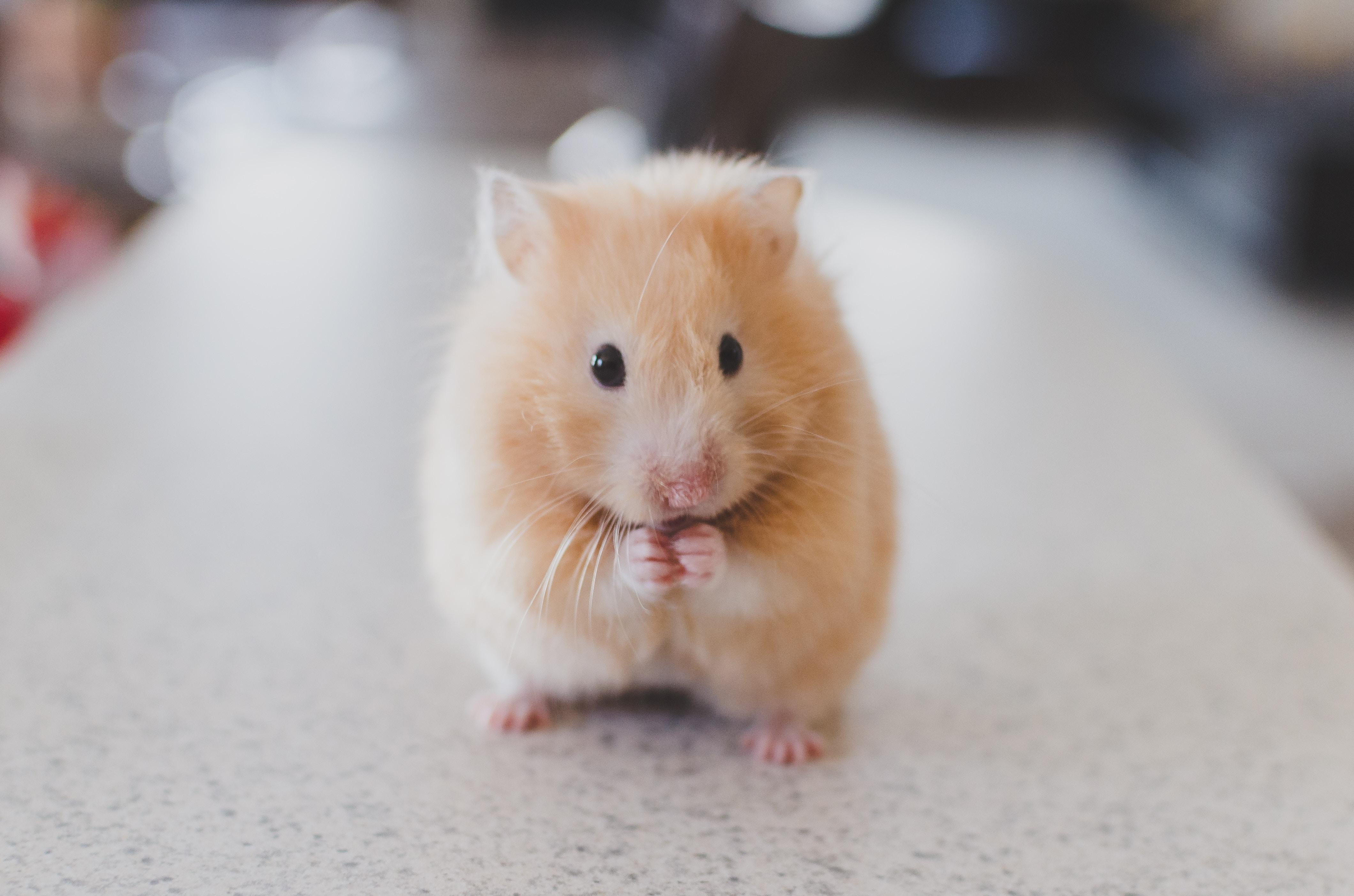 動物病院を探す前に見るブログ